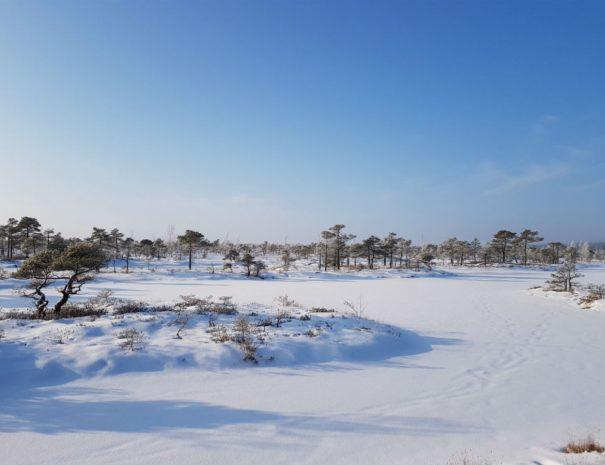 Kemeri National Park In Winter Escaperies