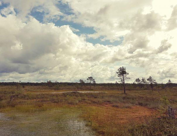 Latvia bogs hiking idaadventures