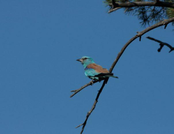 Latvia bird watching idaadventures
