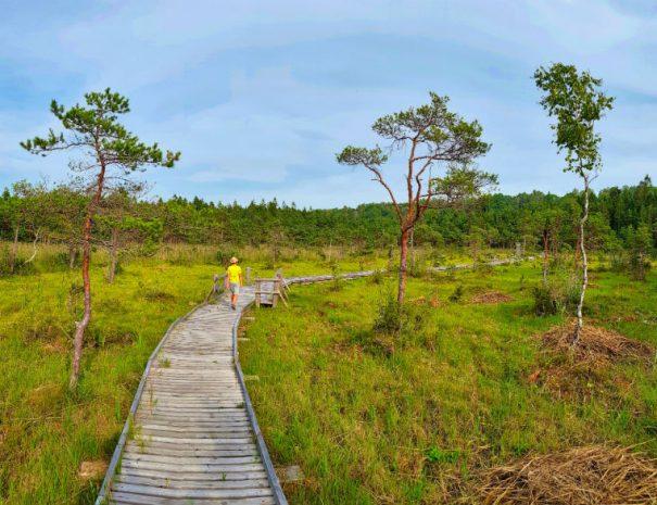 Boarwalk in boglands _ Slitere National Park _ Escaperies
