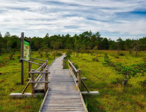 Boglands boardwalk in Slitere National Park _ Escaperies